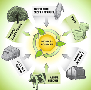 biomass resource