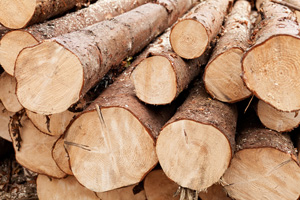 wood biomass energy logs
