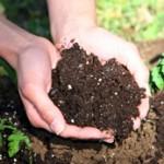 aerobic compost