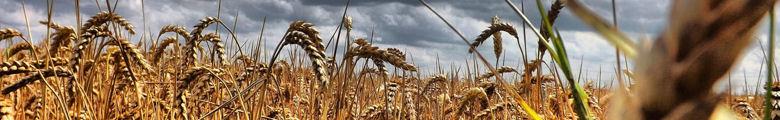 bioenergy image