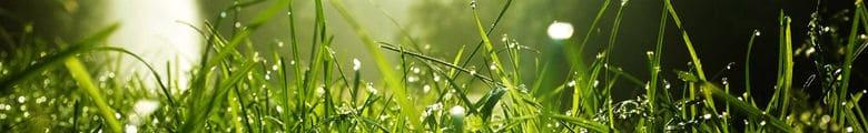 green grass image